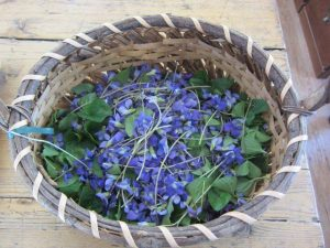 Spring Harvest of Violet Flowers and Leaves