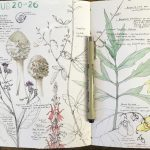 Spring Nature Journaling Workshop with Lara Call Gastinger: Saturday, May 19th (1pm-4pm)