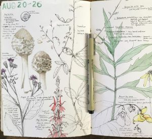 Starting & Maintaining a Field Sketchbook with Lara Gastinger: November 11th (2pm-4pm)