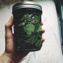 Herbal Cordial Making Workshop with Katelyn Jarkowiec: Sunday, November 5th (3pm-5pm)