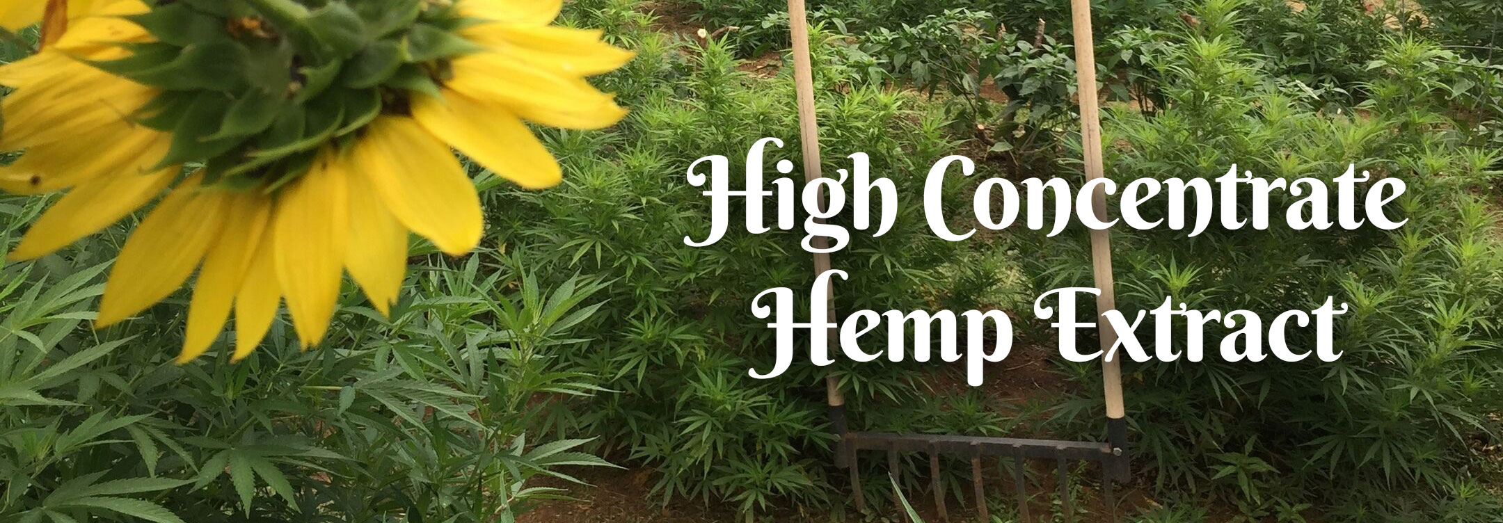High Concentrate Hemp Extract